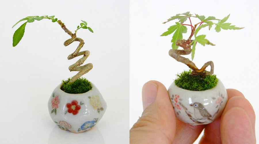bonsai-fotos-1