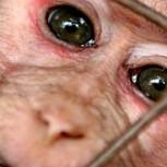 Experimentación cosmética en animales: Prohibición total en la UE