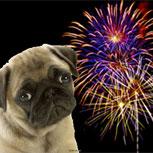 Fobia a fuegos artificiales en mascotas, ¿cómo enfrentarla?