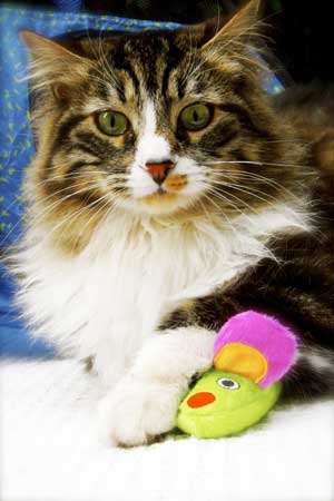 Gatos hipertiroidismo