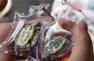 Máxima crueldad: Llaveros con tortugas vivas en China ...