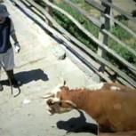 Maltrato animal: Las tremendas deudas que subsisten y que urge mejorar