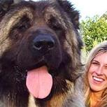 """Los perros más grandes del mundo: 10 fotos de estos """"gigantes"""""""