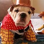 Los 10 mejores disfraces de perros, una selección imperdible