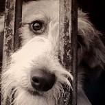 Casos de maltrato animal: ¿Cómo enfrentarlos?