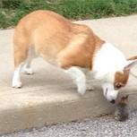 Increíble historia: Un perro y un conejo se transforman en grandes amigos