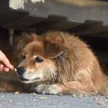 Conmovedora historia: Perra es rescatada de la calle gracias a Google Street View
