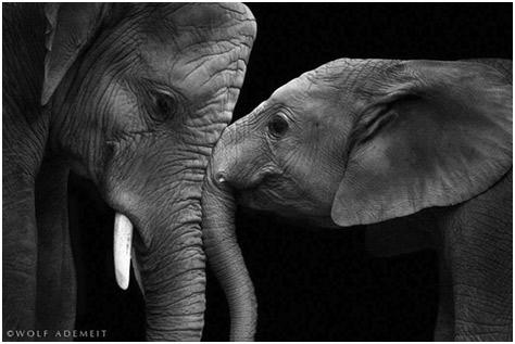 Fotografías de animales en Blanco y Negro: Maestros parrafo posar ...