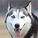 """¿El perro que habla? Mascota le dice """"No"""" a su dueño cuando lo envía a su canil"""