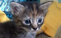 """""""El gato triste"""": El pequeño felino que nunca se alegra y enternece a las redes sociales"""