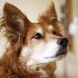 Perro descubre el cáncer en su dueña antes que los médicos y la salva