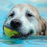 Perro héroe se lanza al mar y salva la vida de un menor, pero muere tras el rescate