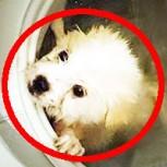 Joven chino mata a su perro en una lavadora y sube fotos a Facebook