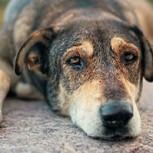 Youtube: La dramática vida de un perro callejero captada con una GoPro