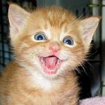 Fin del mito: Los gatos sí sonríen, estas fotos lo demuestran