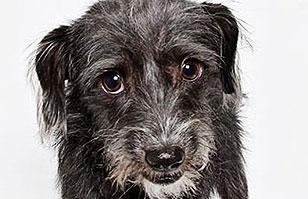 Genial sesión de fotos ayuda a perros abandonados a encontrar un hogar