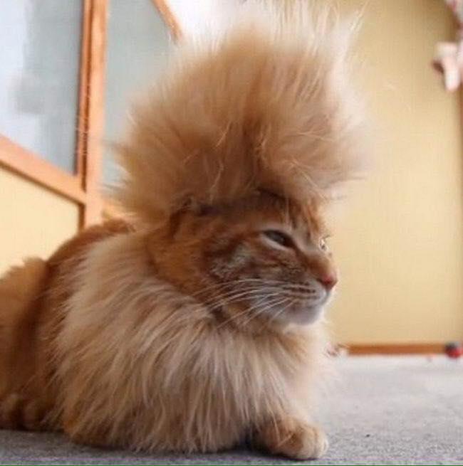 Corte de pelo forma de gato