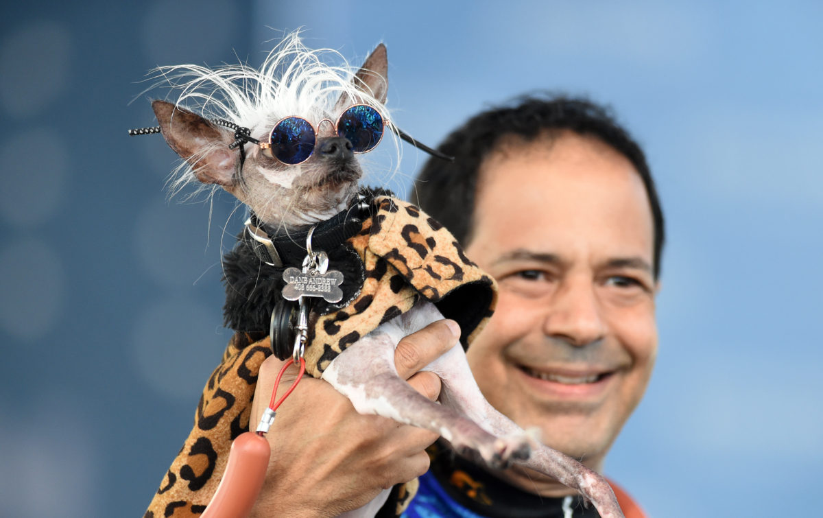 World's Ugliest Dog Competition