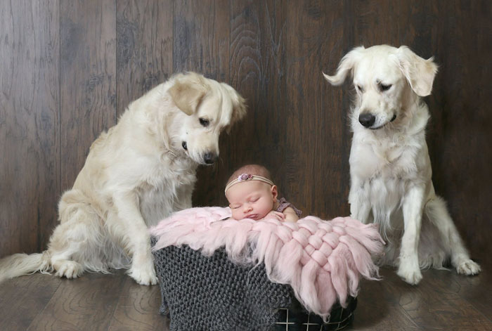 golden-retrievers-helps-toddler-escape-room-cheese-pups-24-5b1a33889298c__700