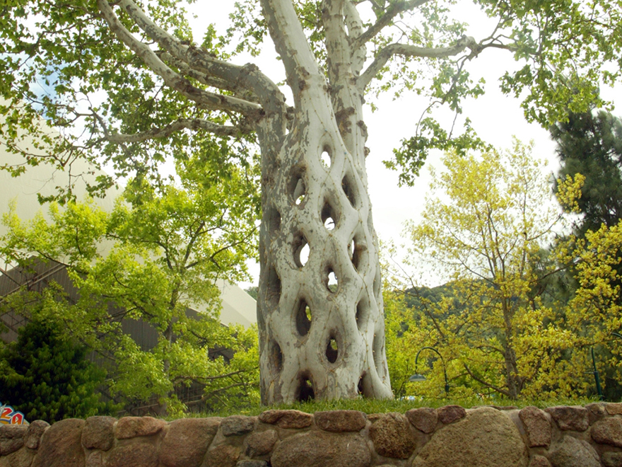 10 de los m s extra os y originales rboles alrededor del for Arboles de jardin fotos