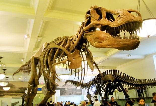 Un esqueleto de T-Rex, parte de la colección de dinosaurios del Museo de Historia Natural de NYC. Foto: getnycd.com