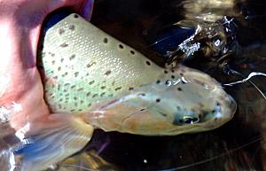 Aprenda acerca de la ley de pesca recreativa en Chile, temporadas y vedas