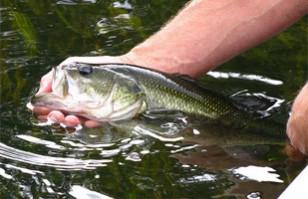 Pesca con Devolución: Campaña que la promueve plantea su innegable importancia