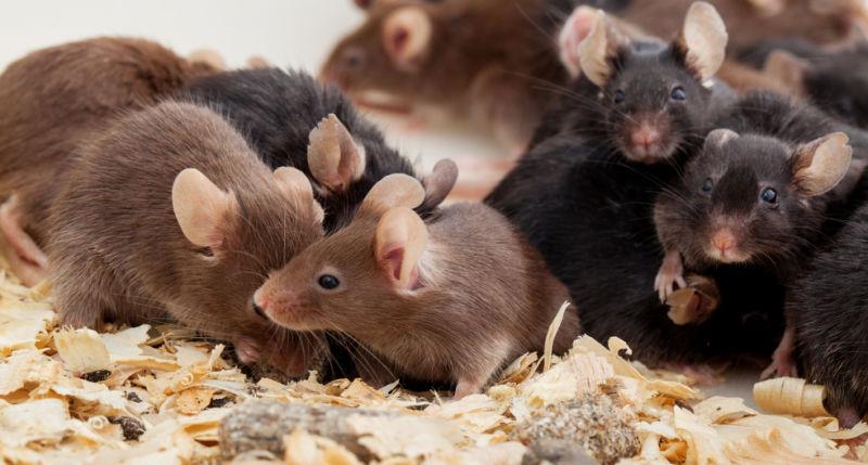 Qu significa so ar con ratones un presagio que puede - Como matar ratones ...