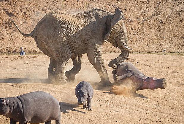 vida de elefante: