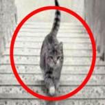 ¿El gato está subiendo o bajando? El nuevo gran debate de las redes sociales