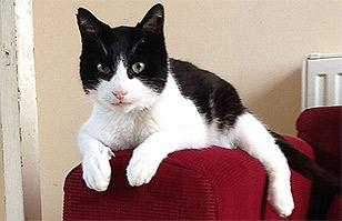 Video: Entérate por qué el gato Merlín es Récord Guinness Mundial