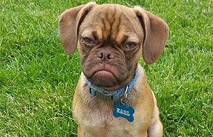 Ha nacido un nuevo meme: Conoce a Earl, el perro gruñón