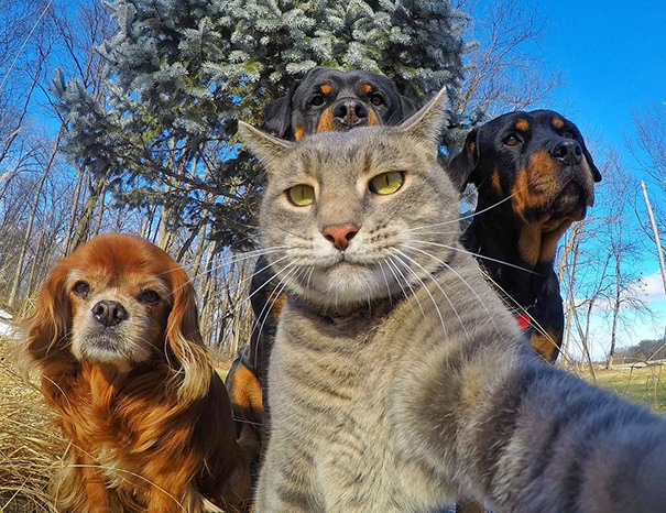 funny-animal-selfies