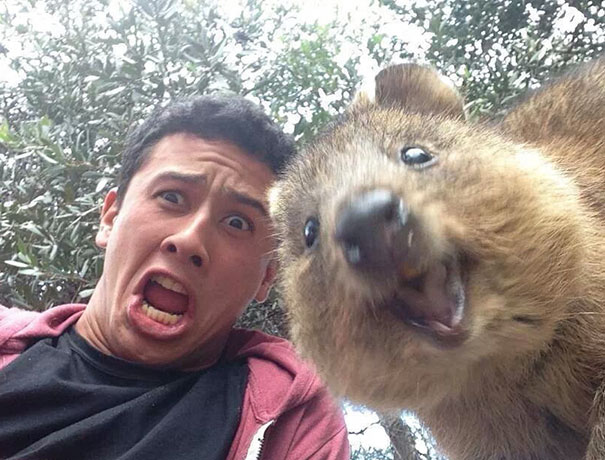 funny-animal-selfies03