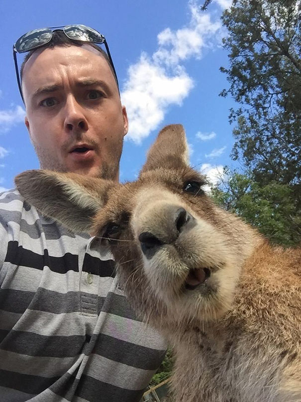funny-animal-selfies08