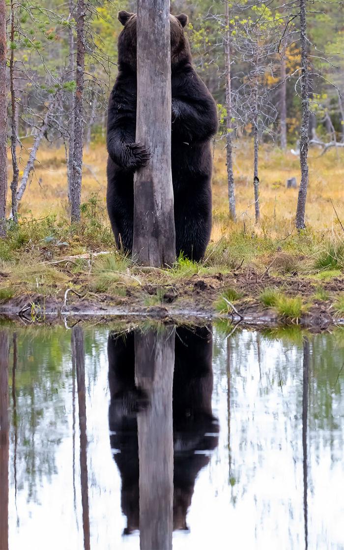 wildlife (26)
