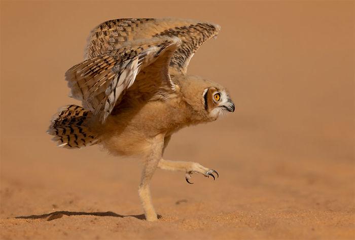 wildlife (9)